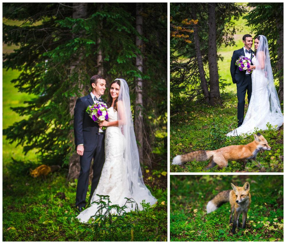 A fox ran through the wedding photos.Vail Colorado Wedding photographed by JMGant Photography.