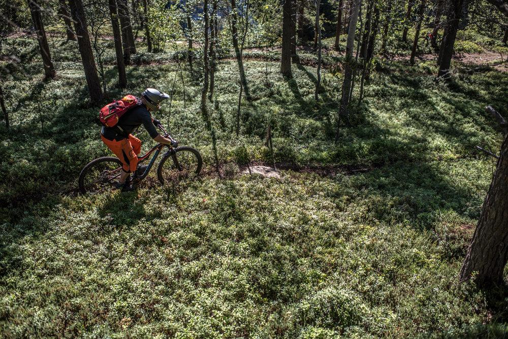 Skibotnin laakson itälaidalla alemmat polut ovat kuin mistä tahansa suomalaisesta kalleelleen käännetystä kangasmetsästä: neulaspolkua, vesiputous ja korkeuseroa nelisensataa metriä.