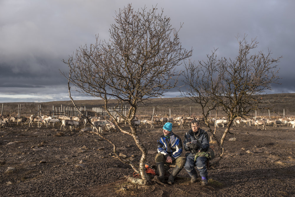 Reindeer herders were watching the herd at Skalluvaara, Utsjoki.  HS 2016.