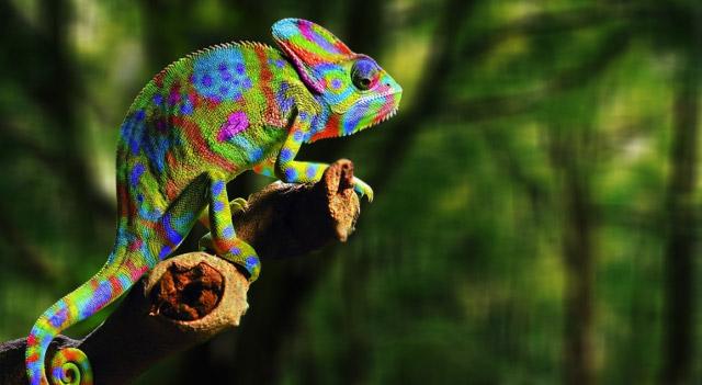 Chameleon, comedian, Corinthian ...