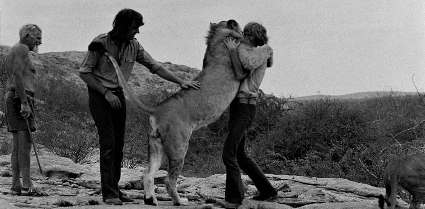 Fierce embrace: Christian the lion and old friends