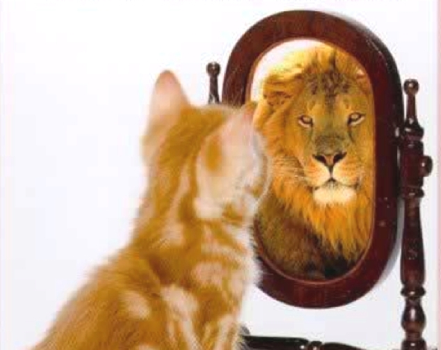 Paws for thought: is confidence is what you see in yourself?