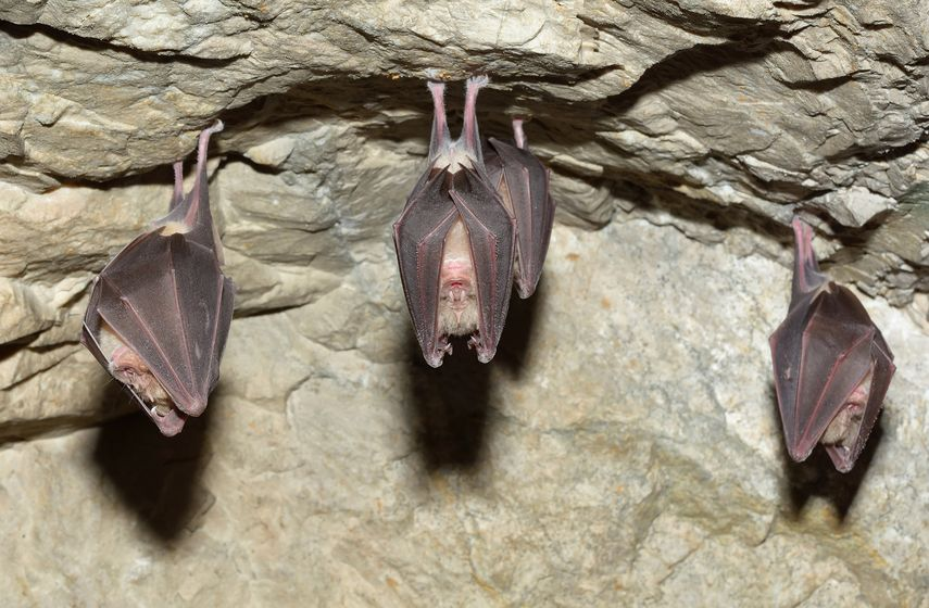 Just hangin' around: bats in the bat cave