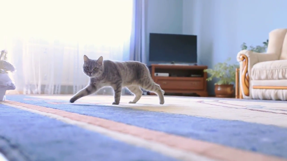 Cat walks across room, but will this get him to the other side?