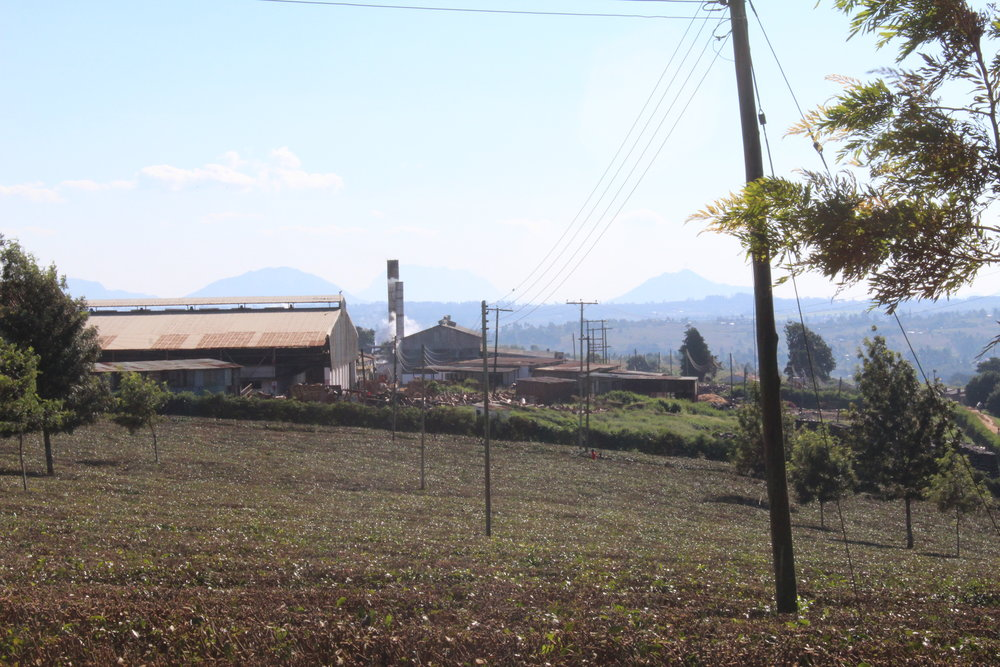 Chisunga Tea Factory