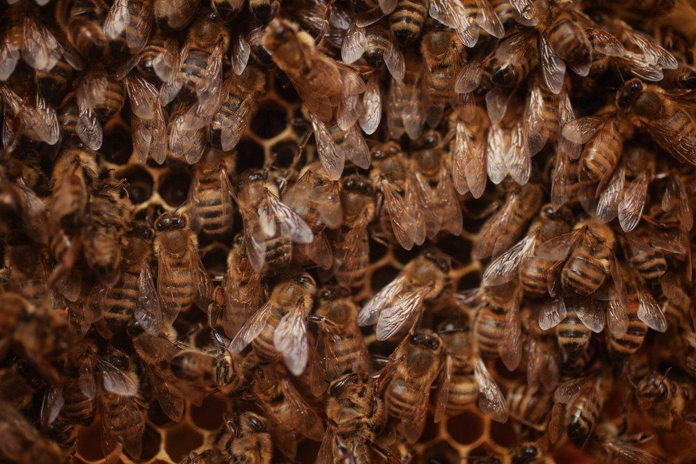 bees-hive-farm-1.jpg