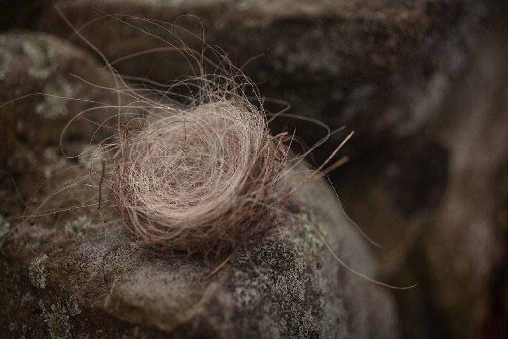 nest-hair-nature-1.jpg