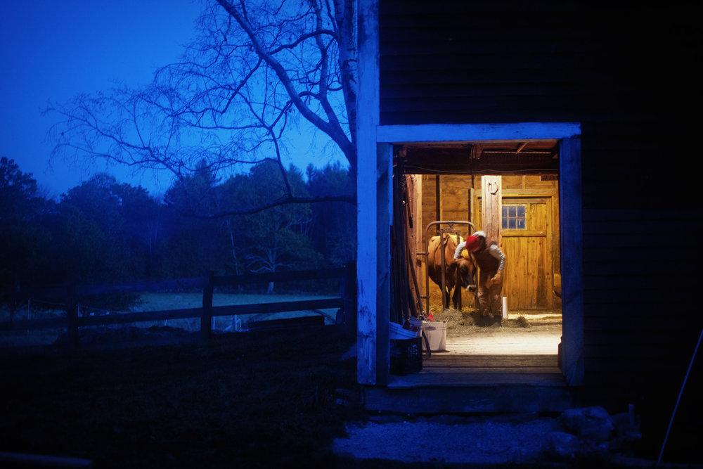 cow-barn-dawn-1.jpg