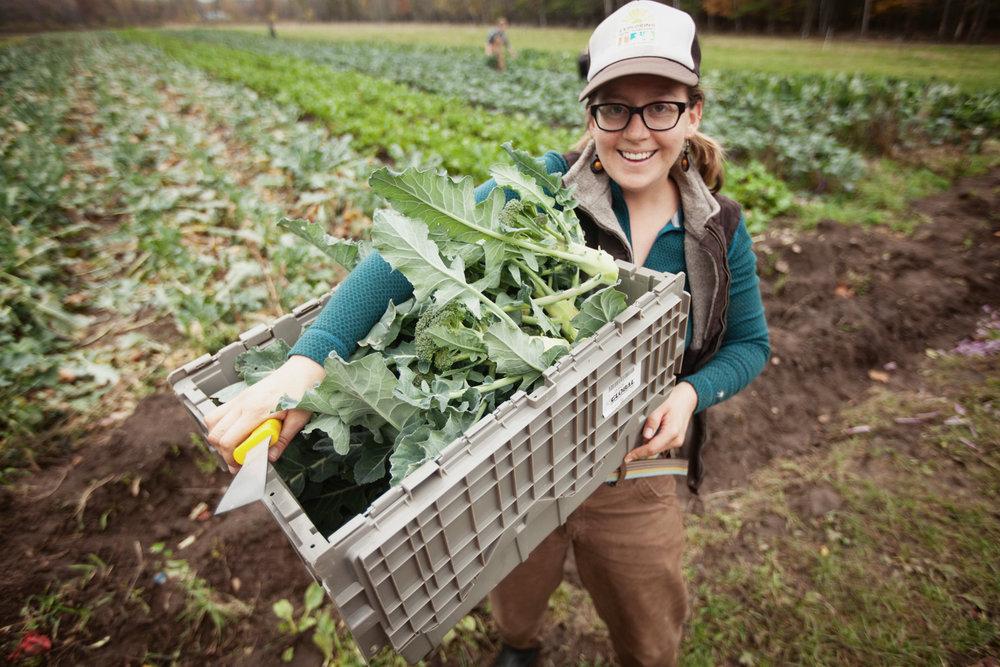 farming-photo-harvest-1.jpg