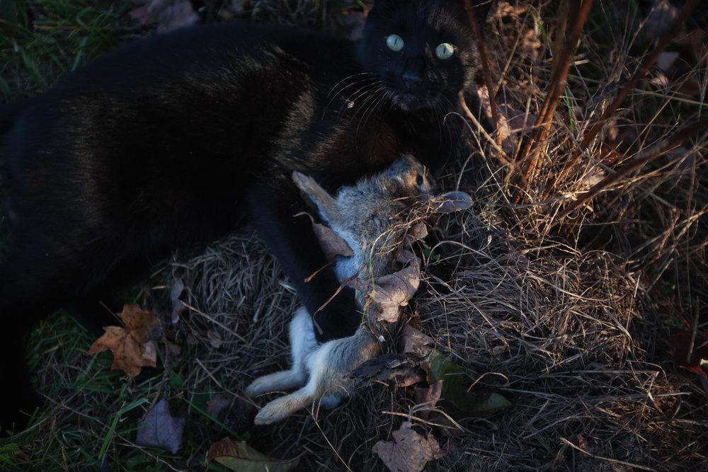 cat-rabbit-dead-1.jpg
