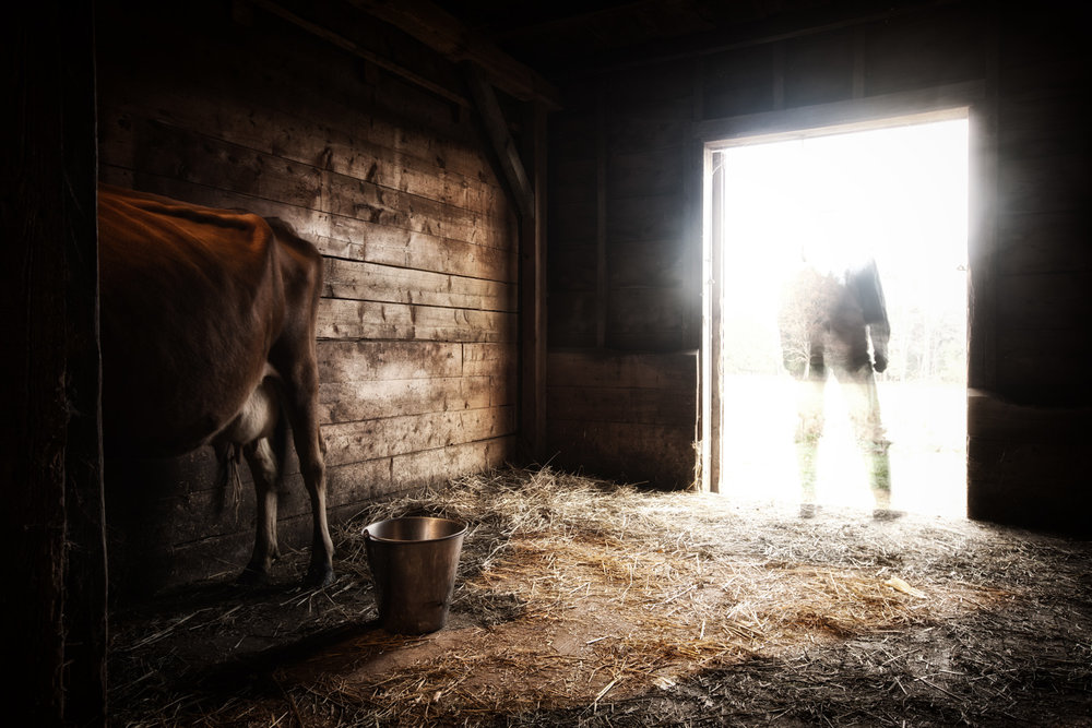 farmer-milking-death-1.jpg