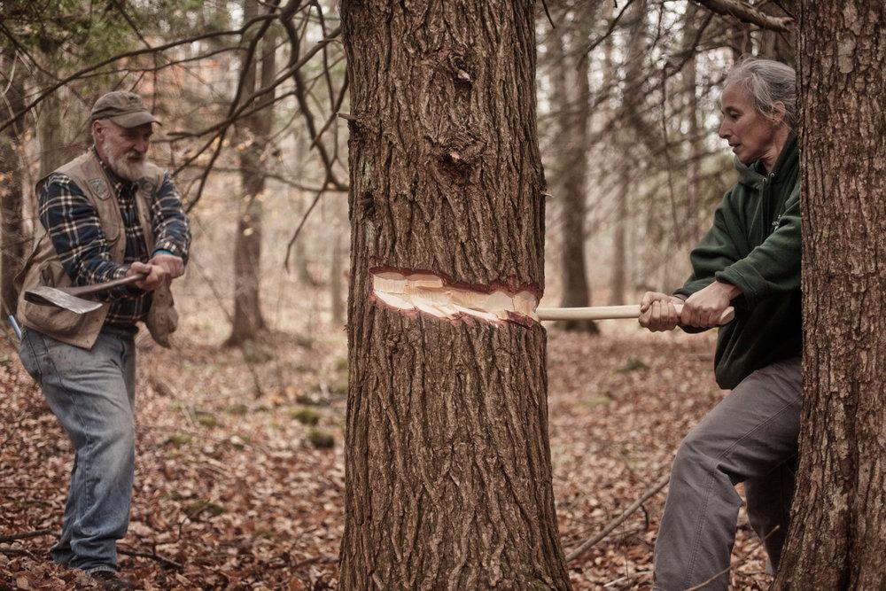 tree-chop-girdle-1.jpg
