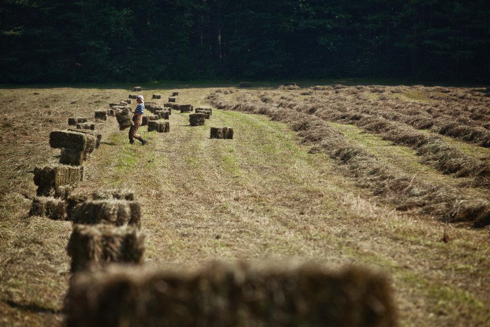 hay-field-bale-1.jpg