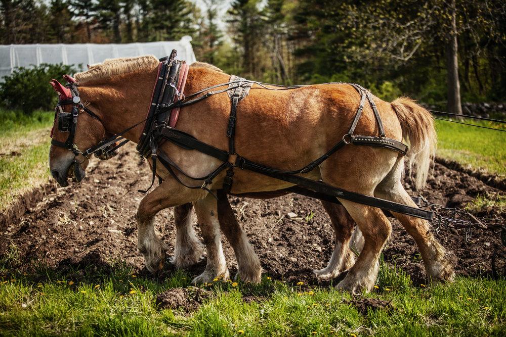 farm-horse-plow-1.jpg