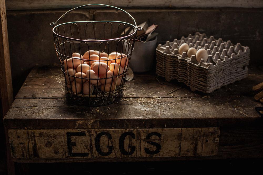 egg-basket-harvest-1.jpg