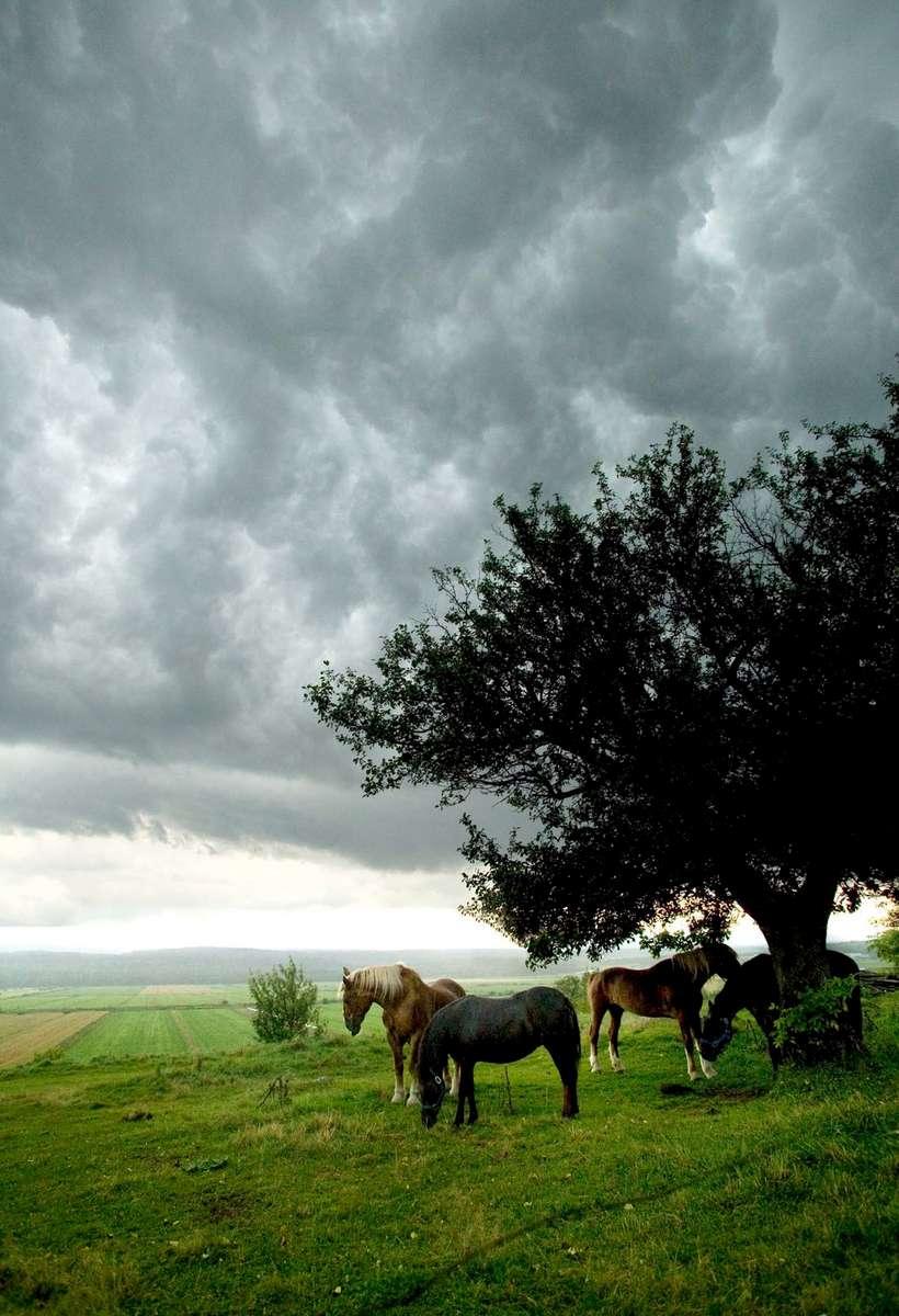 horse-pasture-storm-1.jpg