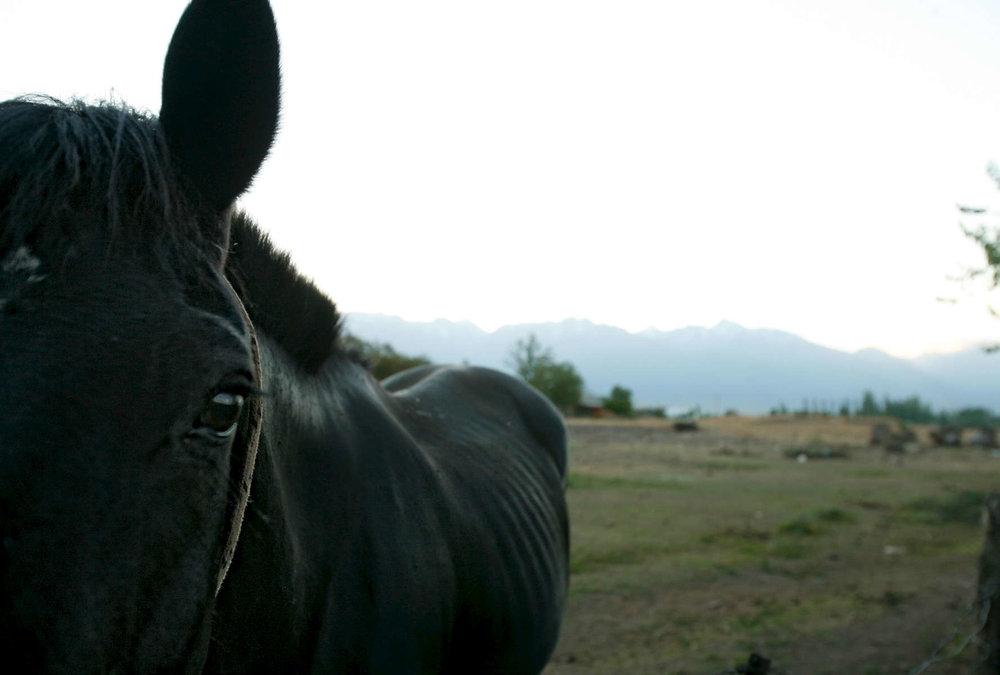 skinny-black-horse-1.jpg