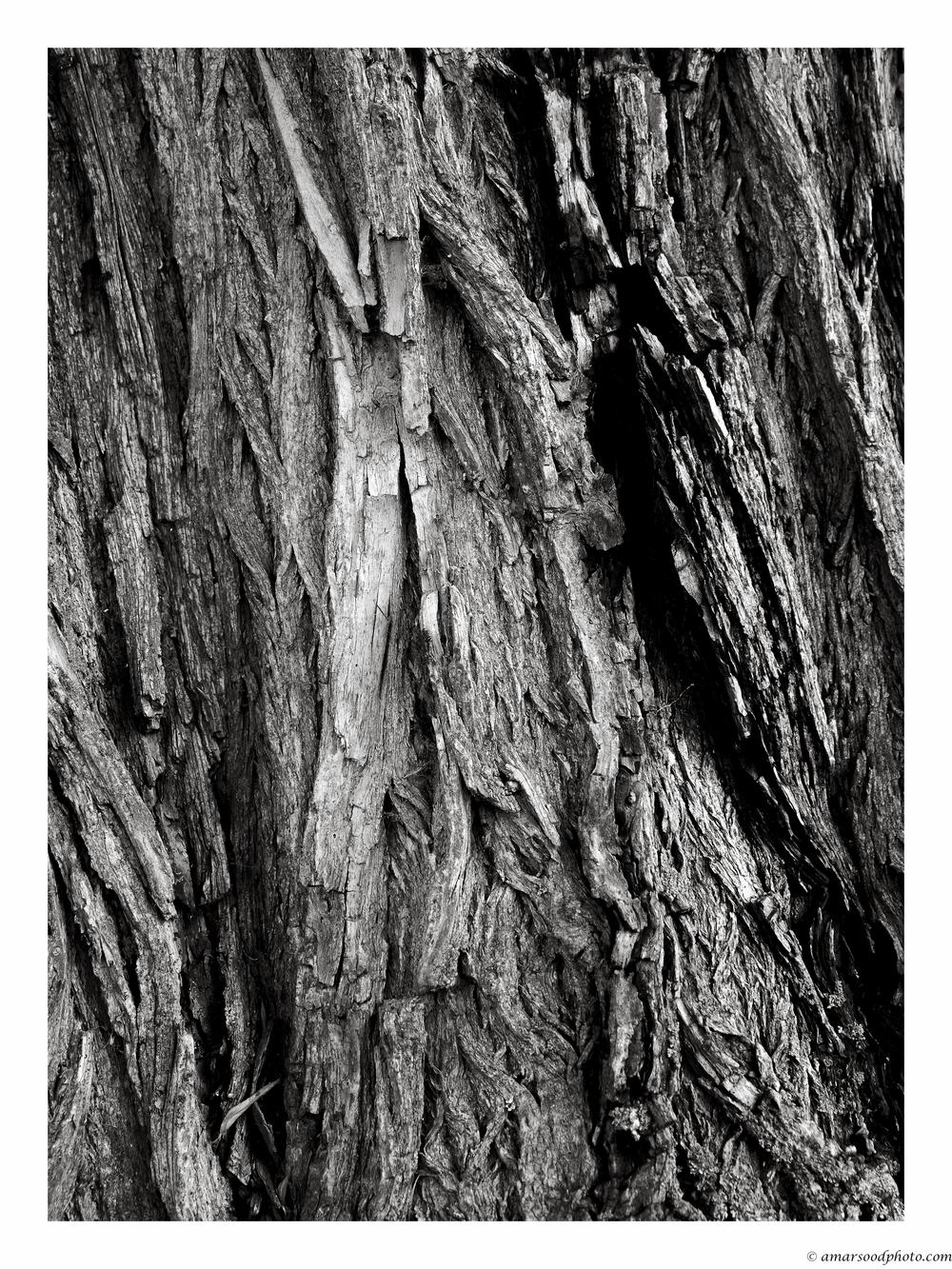 Wisdom (wood).jpg