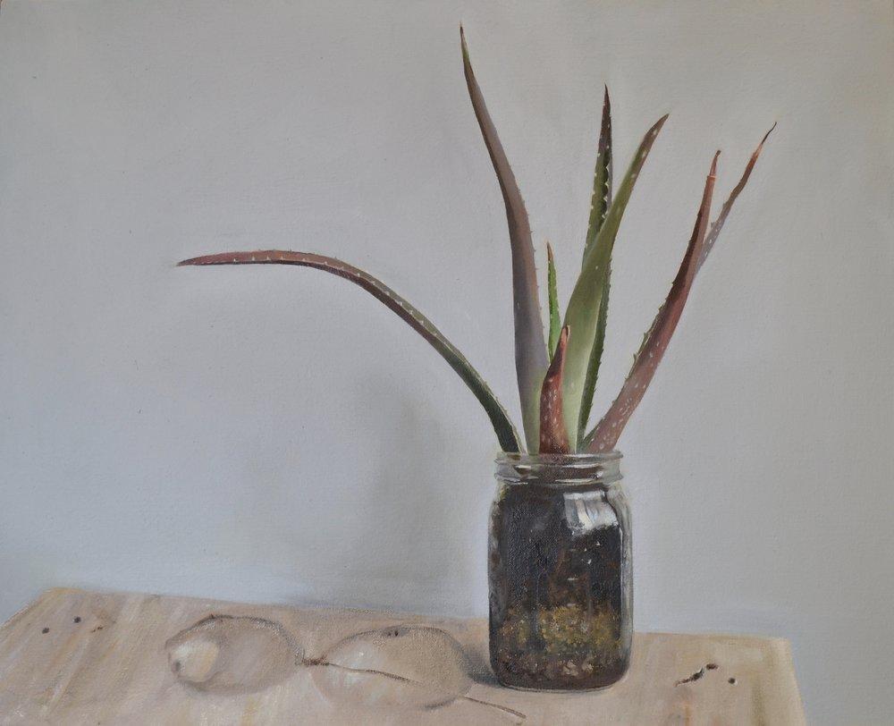 """Aloe, oil on linen, 20"""" x 16"""""""