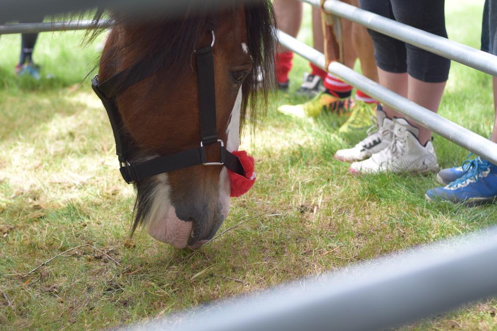 DSC_0560_Horses.jpg