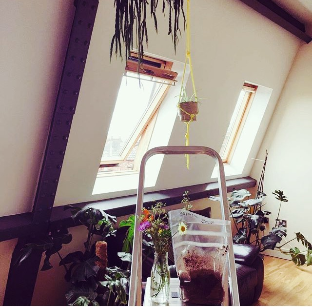 Macramé hanger by Cup + Cloth looking at home here in this fine Manchester loft space, keeping good company with this wonderful urban jungle.