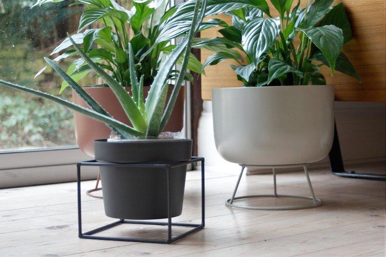 92d24e93b245 Black plant pot + square stand. IMG_7123.jpg