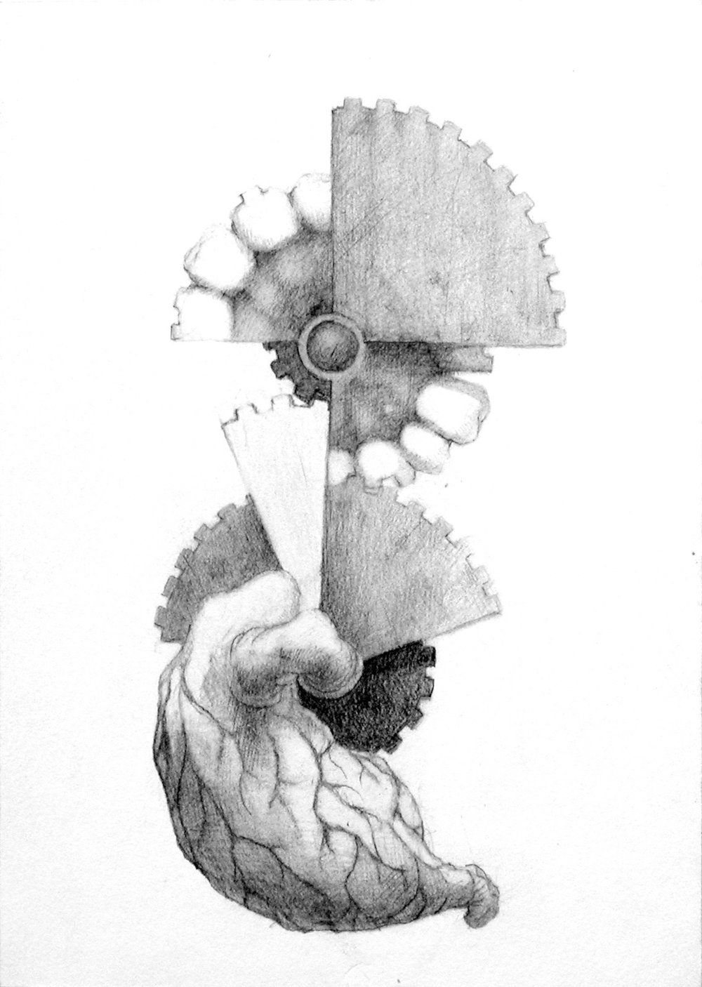 "Gastrovelocity switch. 5x7"".  Graphite on museum board. 2004..jpg"