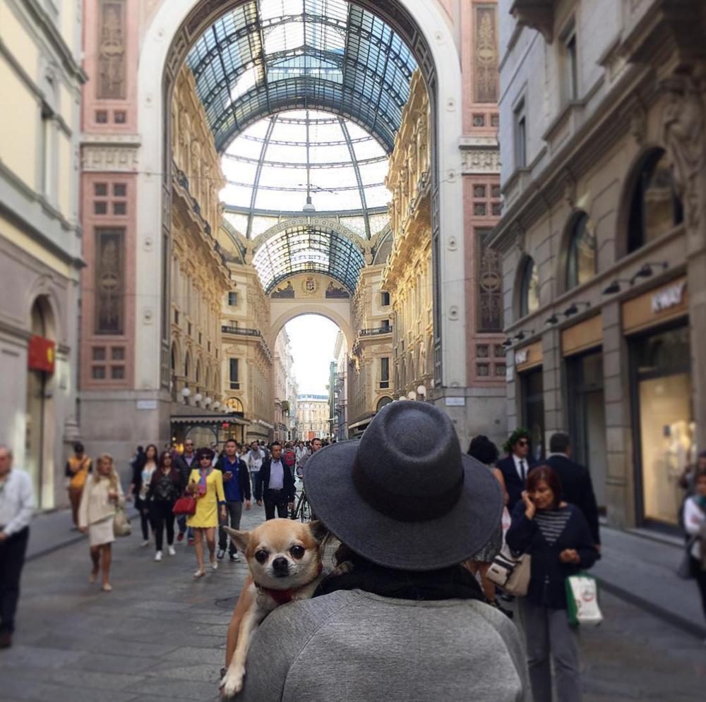 Instagram.com/Miami_Traveller_Dog