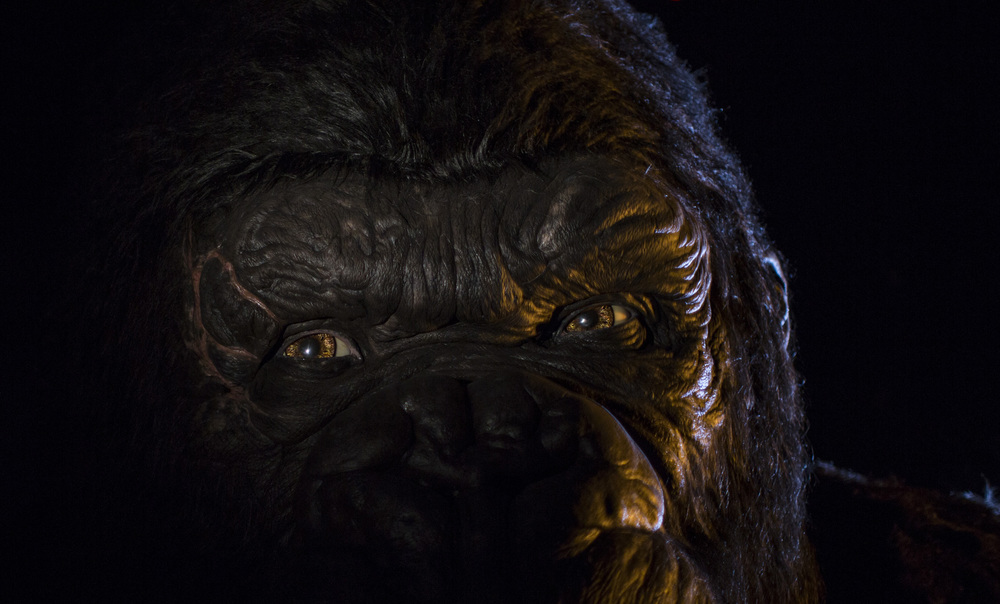 Kong Close-Up