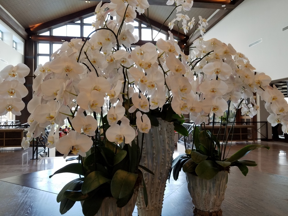 Fresh white orchids in the lobby of Loews Sapphire Falls Resort.