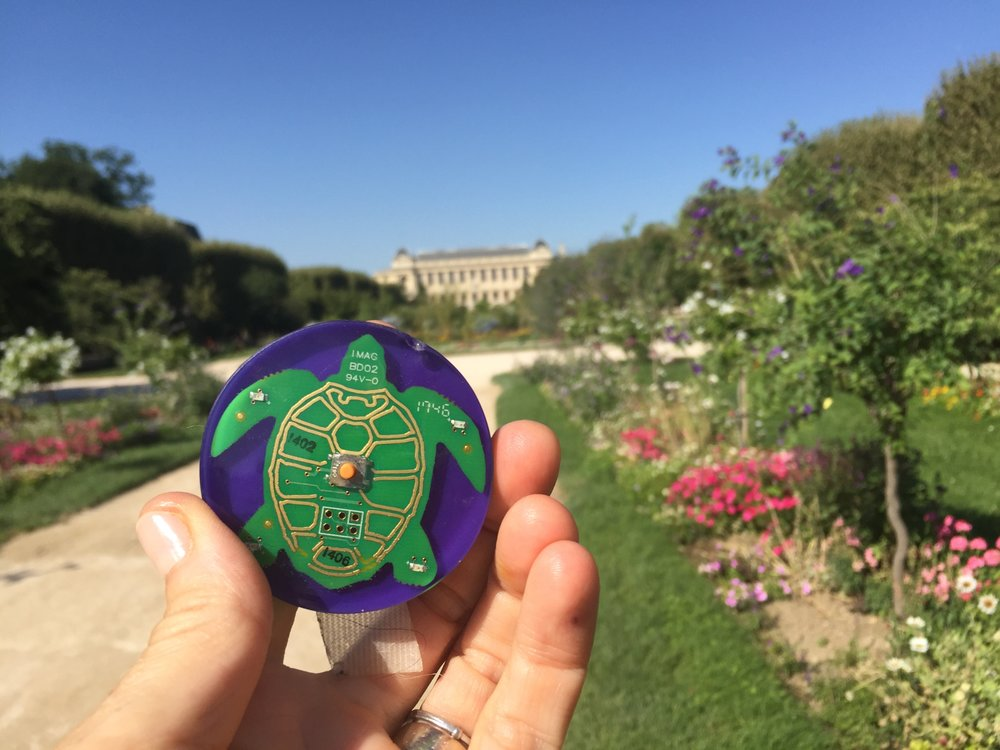 two minute turtle timer takes Summer vacation