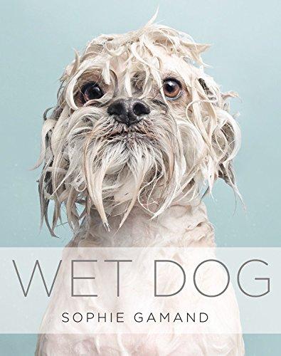 Copy of Wet Dog