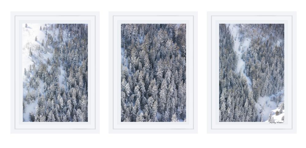 Snowy Pines Triptych À la Montagne Gray Malin