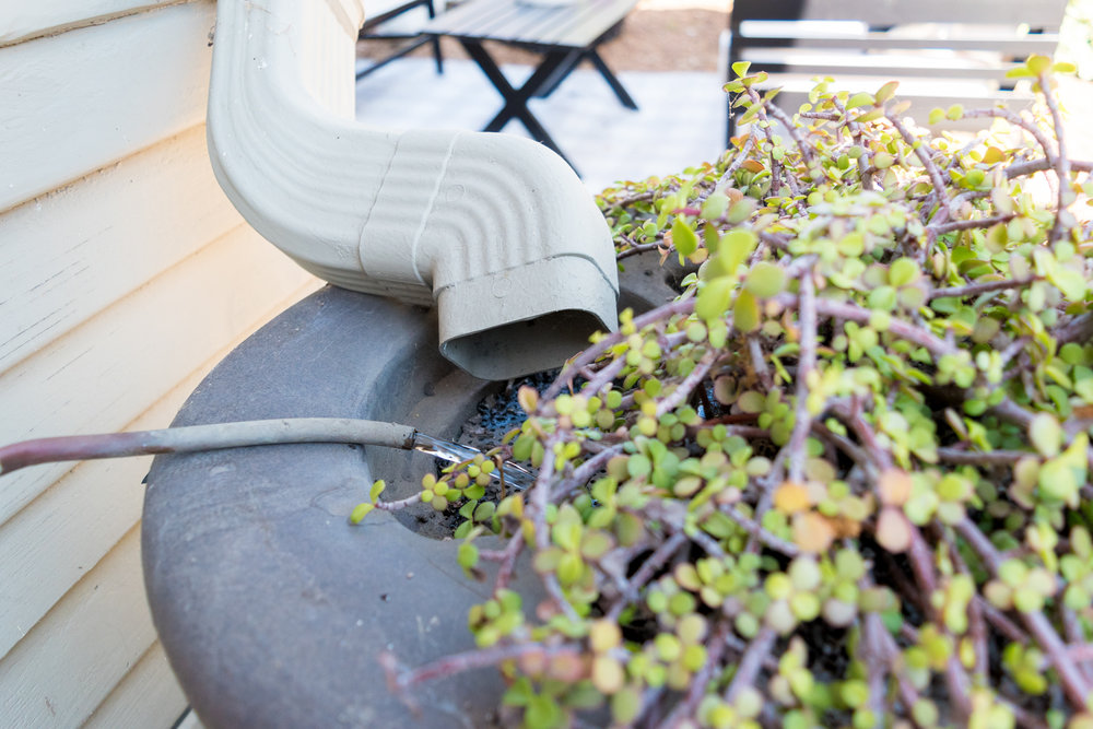 Rainbarrel harvest recycled grey water from air conditioner-0093.jpg