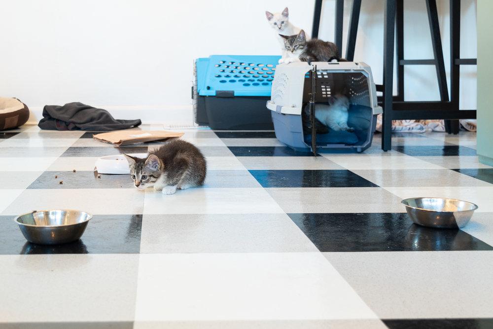 fostering kittens-0166.jpg