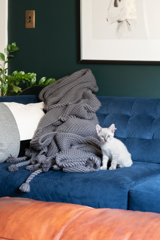 fostering kittens-0069.jpg