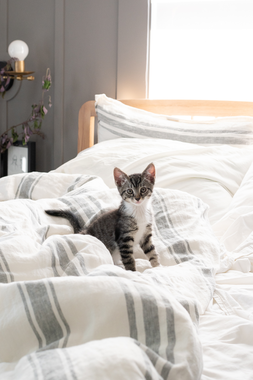fostering kittens-0002-2.jpg