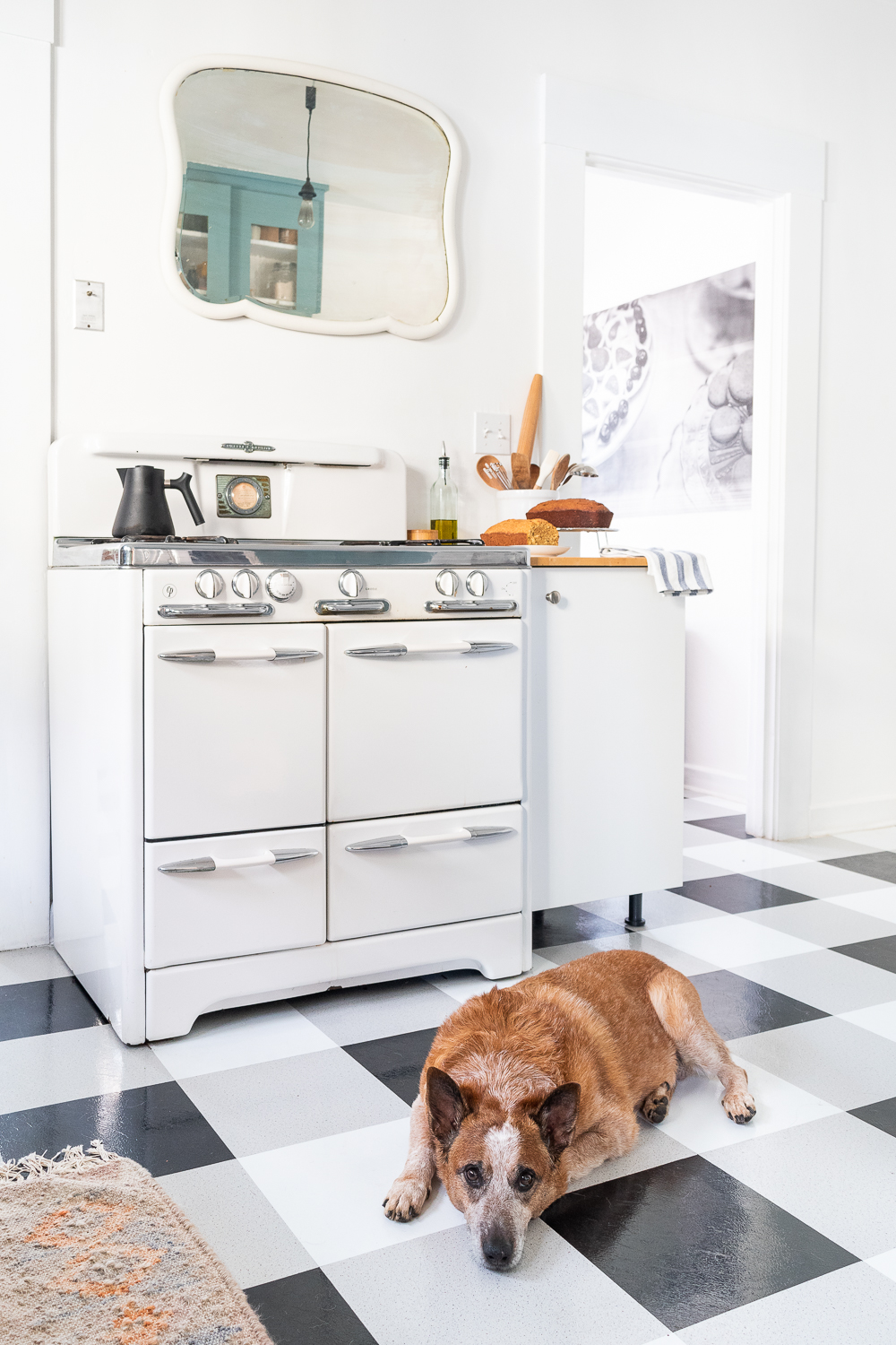 Foster Dog in Retro Kitchen with Vintage Range-0038.jpg