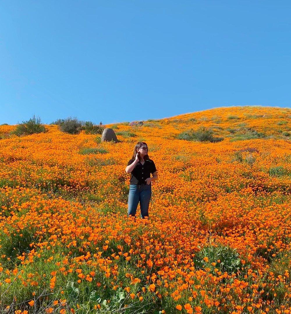 The Gold Hive Ashley Goldman Super Bloom.jpg