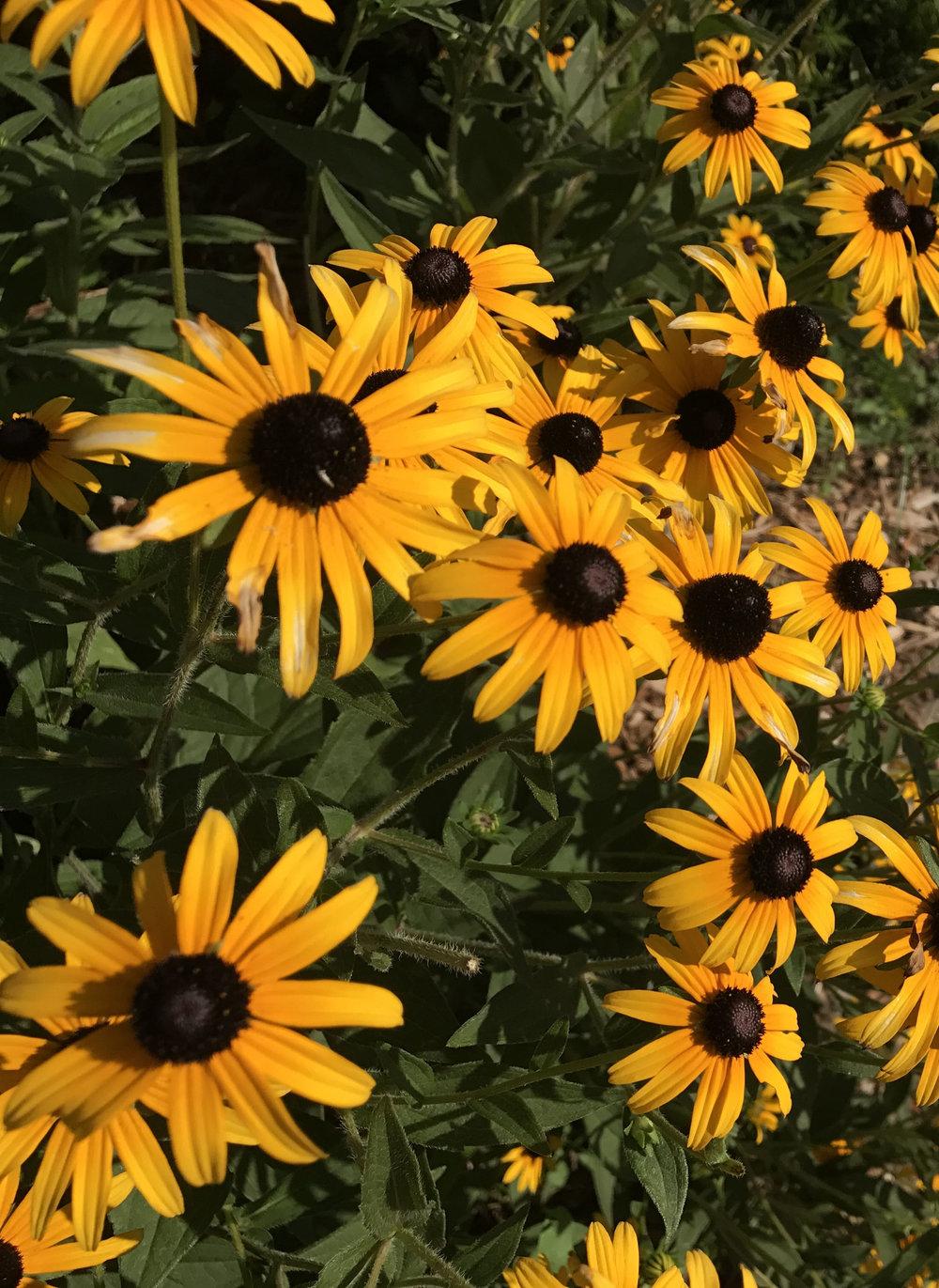 trip-of-a-lifetime-flower-travel-blog