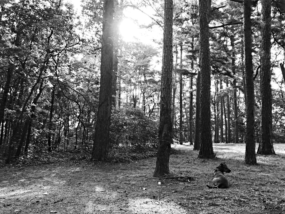 pharaoh_campground_shawnee_national_forest0290.JPG