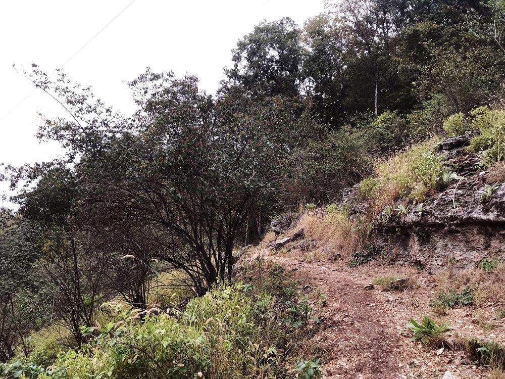 hike_two-mastodon-state-historic-site0361.JPG