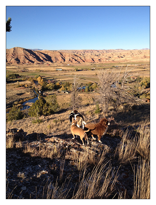 Chihuahua braves Wyoming