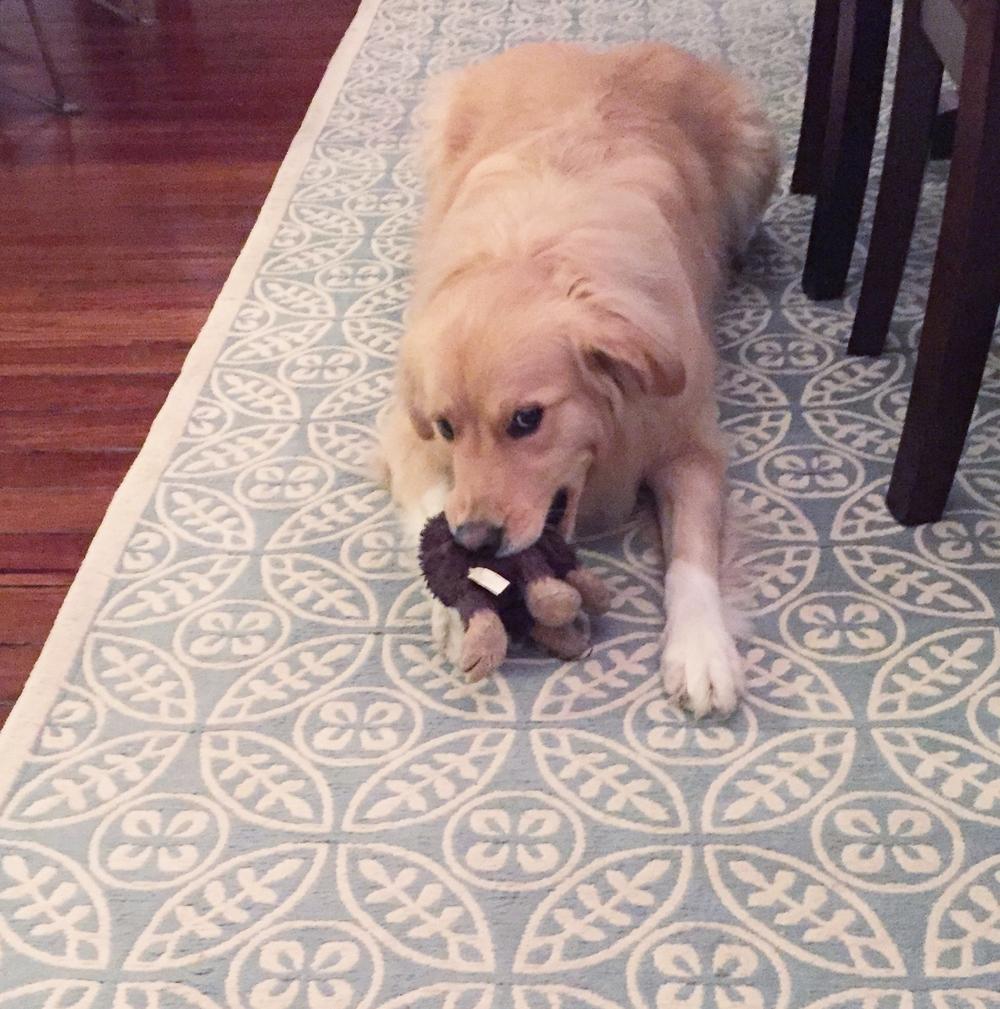 Adopting Annabelle
