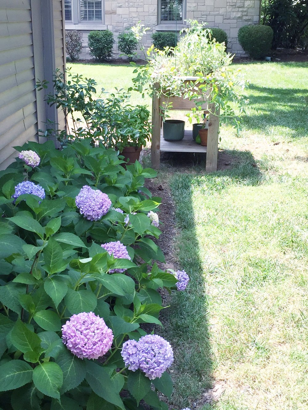 A quick snap of one of my favorite spots in our backyard on the first official day of summer. I love that the hydrangeas are starting to bloom!