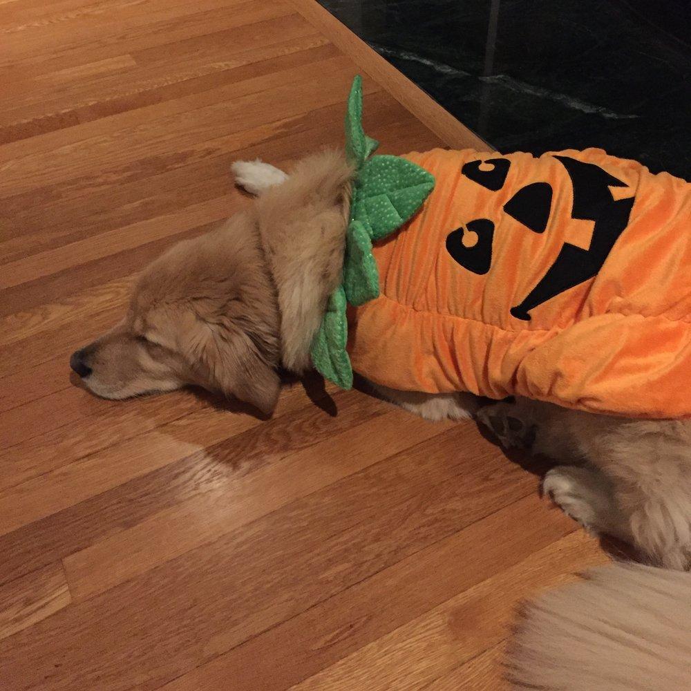 AB Pumpkin.JPG
