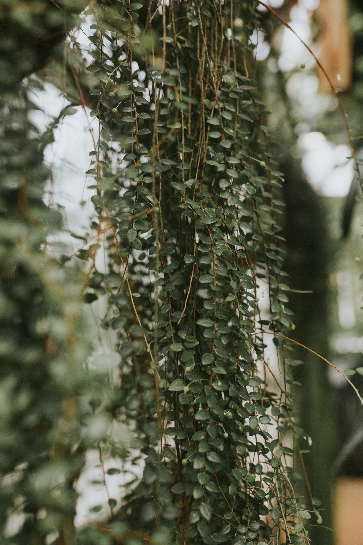 greenhouse photoshoot new york botanical garden