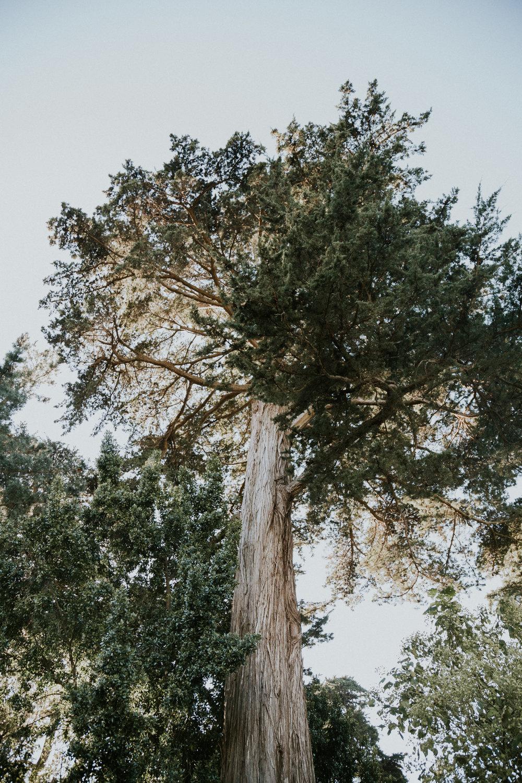 redwood botanical garden tree sf california best things to do in san francisco travel guide photos photographer wanderlust-2.jpg