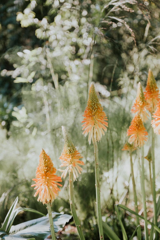 sf california san francisco travel photos botanical garden flower nature tribe archipelago photographer wanderlust -11