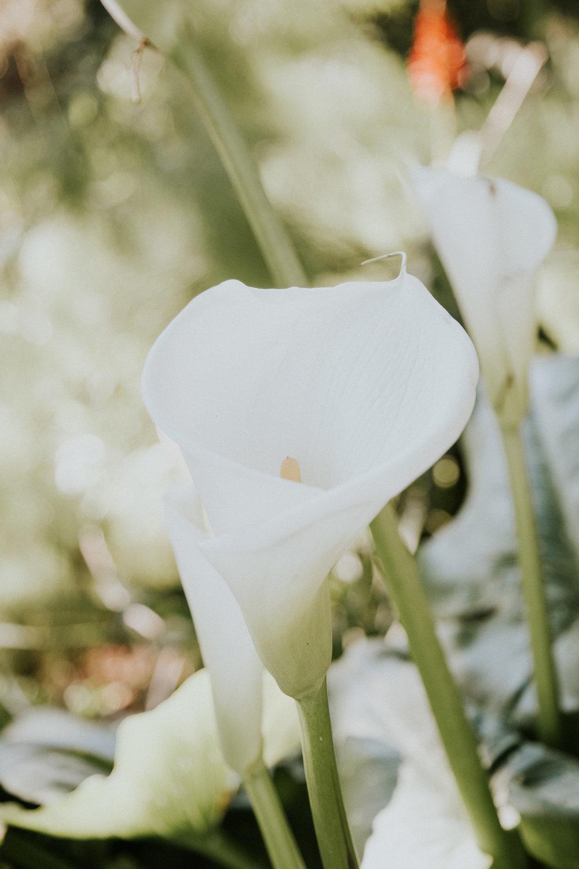 sf california san francisco travel photos botanical garden flower nature tribe archipelago orchid photographer wanderlust -12